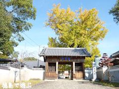 地蔵寺のイチョウ