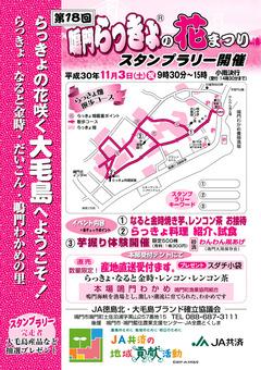 徳島県鳴門市土佐泊浦 鳴門らっきょの花まつり 2018
