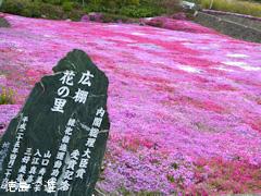 徳島県美馬市脇町 広棚の芝桜 2015