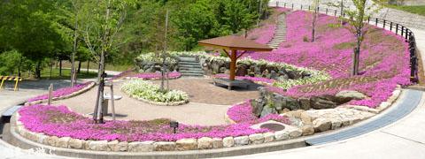とくしま植物園 芝桜