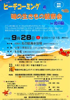 徳島県阿南市 北の脇海水浴場 ビーチコーミング 磯の生きもの観察会