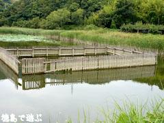 鳴門 中池のオニバス 2009