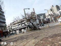 徳島県徳島市 両国橋東公園 寒桜 蕾 2015