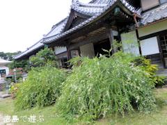 萩寺 最明寺 萩の花 2012