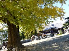 地蔵寺のイチョウ 2012