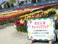 徳島県板野郡北島町 きたじまチューリップフェア 2018