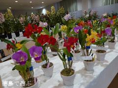 第55回 徳島洋蘭展