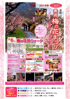 徳島県吉野川市 美郷 梅の花まつり 2016