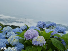 大川原高原 雲海 紫陽花 あじさい 2011