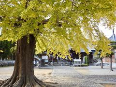徳島県板野郡板野町羅漢 地蔵寺のイチョウ 2017