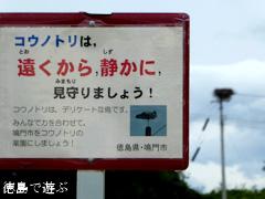 徳島県鳴門市大麻町 コウノトリ 電柱 巣 2015年6月27日