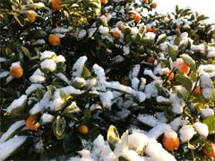徳島 雪 積雪 2018年1月11日