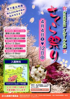 徳島県名西郡神山町 神山森林公園 イルローザの森 さくら祭り 2015