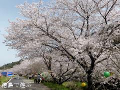 徳島県勝浦郡勝浦町 第11回 勝浦さくら祭り 2014