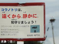 徳島県鳴門市大麻町 コウノトリ 電柱 巣 2015年9月7日