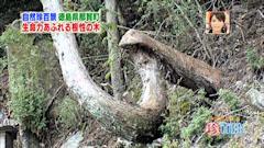 ナニコレ珍百景 徳島県 那賀町