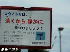 徳島県鳴門市大麻町 コウノトリ 電柱 巣 2015年8月25日