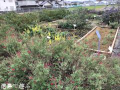 徳島県徳島市国府町 徳島大学 薬用植物園 2017