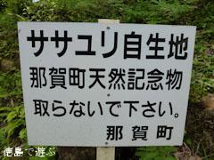 出羽 ササユリ 神領ユリ 2011
