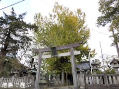 徳島県名西郡石井町 天神のイチョウ 2015