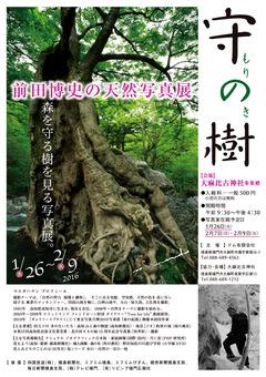 徳島県鳴門市 大麻比古神社 前田博史の天然写真展 守の樹 2016