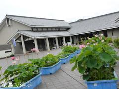 板野郡板野町 徳島県立埋蔵文化財総合センター 古代蓮 古代ハス 2014