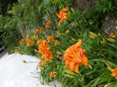 徳島県 神山町 岳人の森  2014年7月下旬