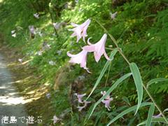 徳島県那賀郡那賀町出羽 農村レストラン いづりは 2015