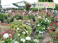 藍翠苑 バラ園
