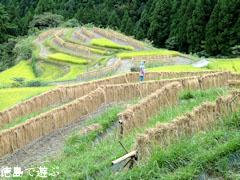 樫原の棚田 秋 2010