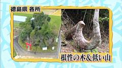 ナニコレ珍百景 徳島県