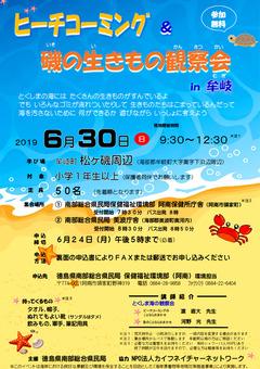 徳島県 牟岐町 松ヶ磯周辺 ビーチコーミング 磯の生きもの観察会 2019