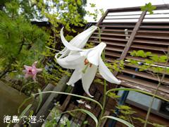 徳島県那賀郡那賀町出羽 農村レストラン いづりは ササユリ 2014