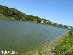徳島県鳴門市 中池のオニバス 2015