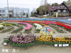 徳島県板野郡北島町 きたじまチューリップフェア 2015