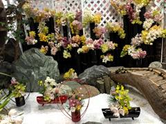 徳島県美馬市脇町 河野メリクロン 第16回 全国シンビジウム逸品展