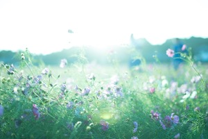 2017年を予知しよう!「2017年を予知する瞑想法セミナー」@大阪 谷町四丁目 あるぢや