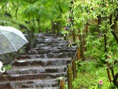 雨イメージ01