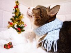 冬場の首のコリは要注意です。