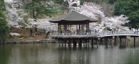 スピリチュアルな桜のパワー