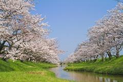 桜イメージ02