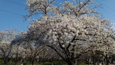 花園中央公園イタグレ6