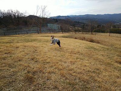 黒沢牧場ドッグラン6