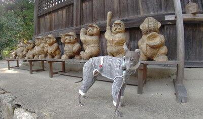 大滝神社イタグレ (1)