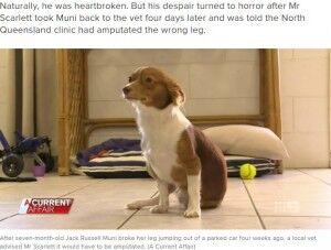 右足を骨折した犬
