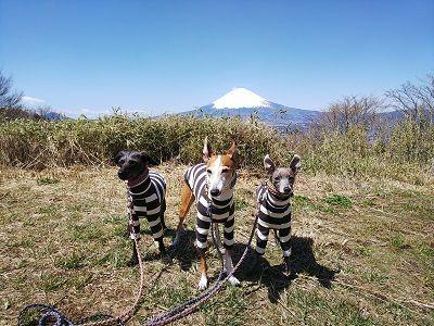 箱根スカイライン_イタグレ3