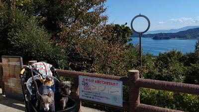 天橋立傘松公園開運 (1)