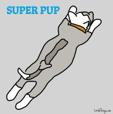 寝相で分かる愛犬の性格5