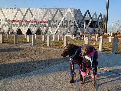 花園ラグビー場イタグレ