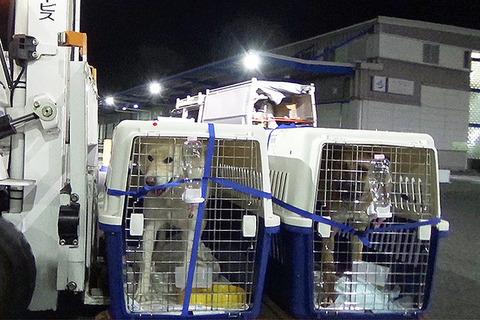 韓国の食用犬保護